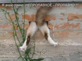 post-40-0-00446100-1327409226_thumb.jpg