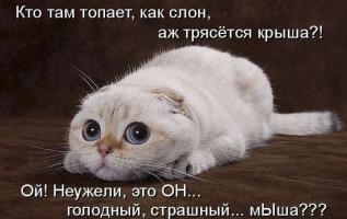 post-40-0-78893200-1327409450_thumb.jpg